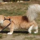 Zeus Kamik*Pl (Zefir)